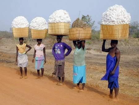 Encore une astuce pour introduire des OGM en Afrique de l'Ouest ?